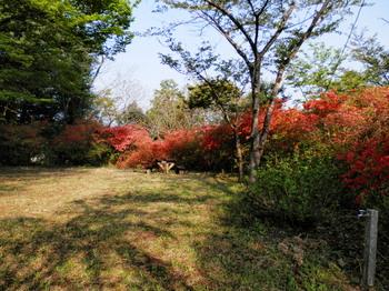 あじさい公園(山ツツジ)2.jpg