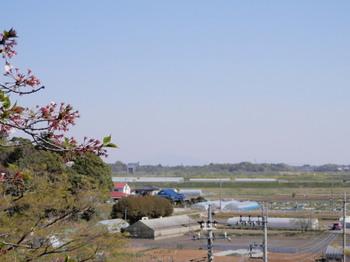 さくら山(利根川を望む).jpg