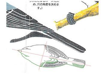 シジュウカラ(CAD、なぞり書き).jpg