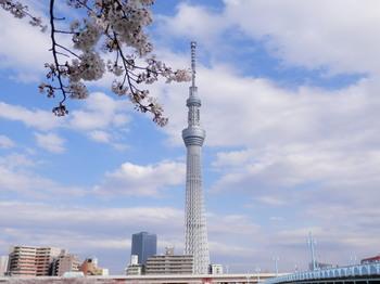 スカイツリーと言問橋.jpg