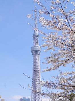 スカイツリー(隅田公園).jpg