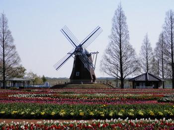 チューリップと風車.jpg
