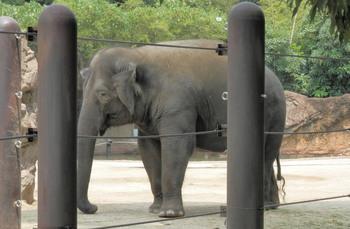 上野動物園2.jpg