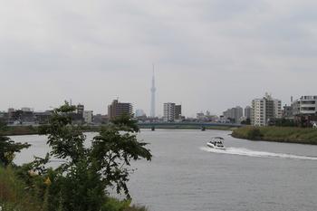 中川(スカイツリー).JPG