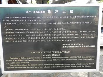 亀戸大根の説明書き.JPG