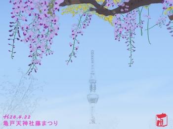 亀戸天神藤まつり(イラスト).jpg