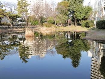 仙台堀川公園(汐入りの池).jpg