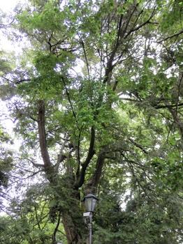 共生の木.jpg