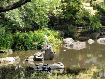 名主の滝公園(池).jpg