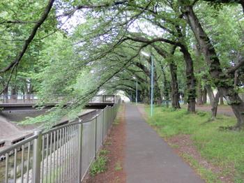 善福寺川緑地公園1.jpg