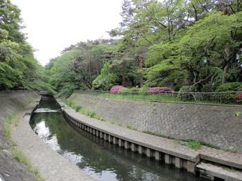 善福寺川緑地公園2.jpg