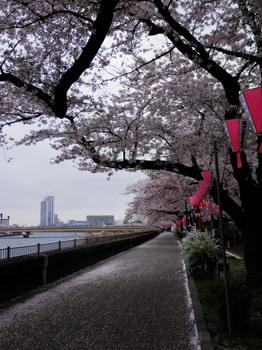 墨堤桜まつり1.jpg