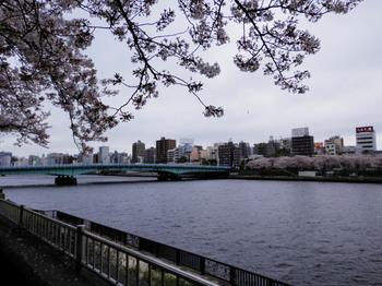 墨堤桜まつり3.jpg