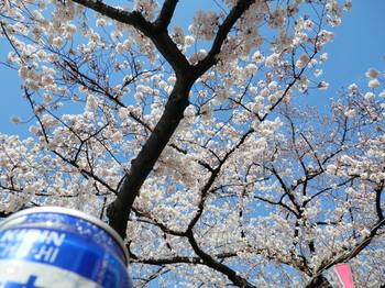 墨堤桜まつり(花見酒)地点2.jpg