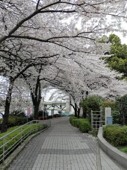 墨田区役所脇.jpg