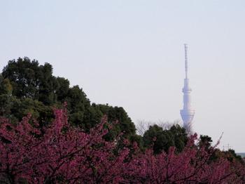 大横川(茂森橋付近).jpg