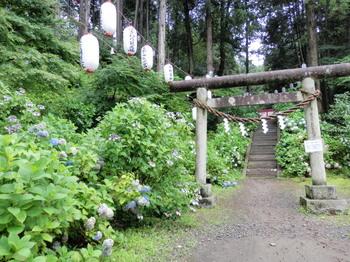 太平神社(あじさい祭り)1.jpg