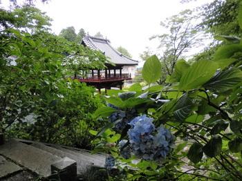 太平神社(あじさい祭り)3.jpg
