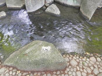 小松川境川親水公園4.JPG