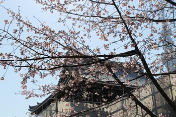 弘福禅寺と桜.JPG