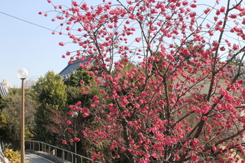 弘福禅寺と梅.JPG