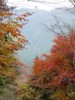 払沢の滝から綾滝を望む.jpg