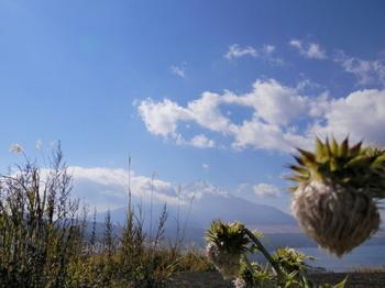 明神山の山頂から(ノアザミ越し).jpg