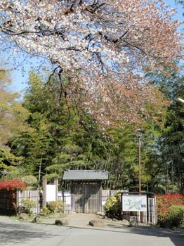 桜と正面入口.jpg