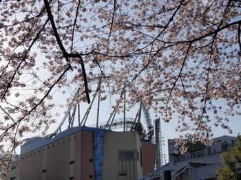 桜越しのコースター.jpg