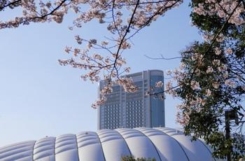 桜越しの東京ドーム.jpg