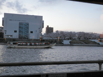 桜(夜桜船から).jpg
