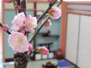 盆栽(梅)3.jpg