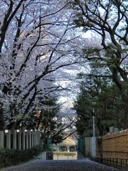 礫川公園1.jpg