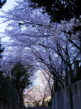 礫川公園2.jpg
