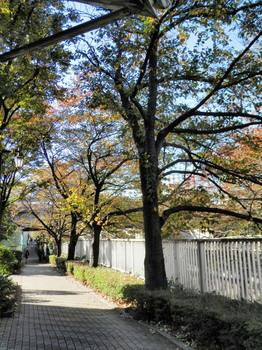 神田川(東中野)2.jpg