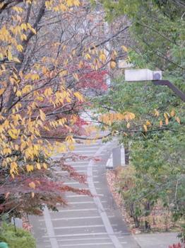 赤羽緑道公園3.jpg