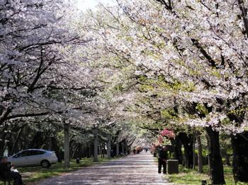 辰巳の森緑道公園1.jpg
