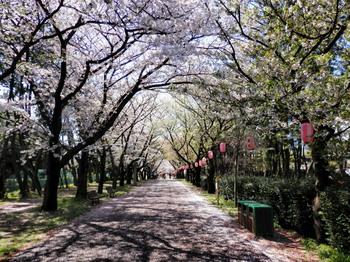 辰巳の森緑道公園2.jpg