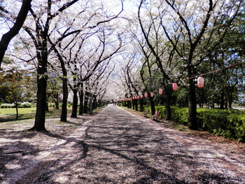 辰巳の森緑道公園4.jpg