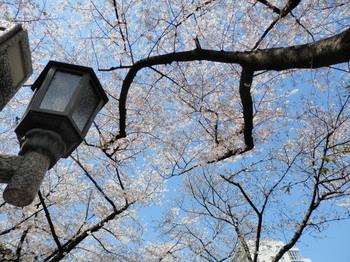 辰巳の森緑道公園5.jpg