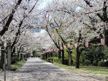 辰巳の森緑道公園7.jpg