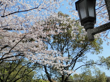 辰巳の森緑道公園8.jpg