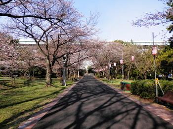 辰巳緑道公園の桜.jpg