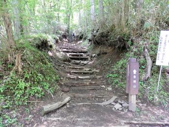金時山登山道の一部.jpg