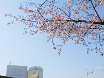 隅田公園(桜)1.JPG