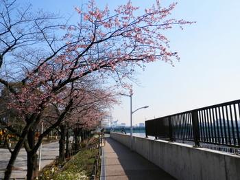 隅田公園(桜)2.JPG