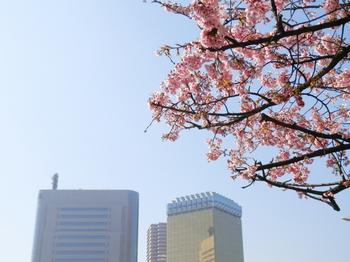 隅田公園(桜)3.JPG