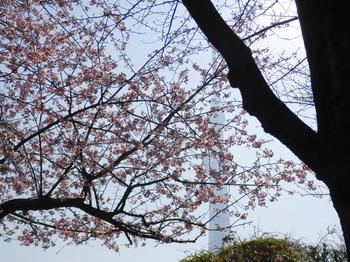 隅田公園(桜)4.JPG