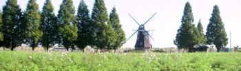 風車とコスモス2.jpg