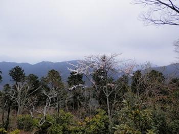 高尾山頂上.jpg